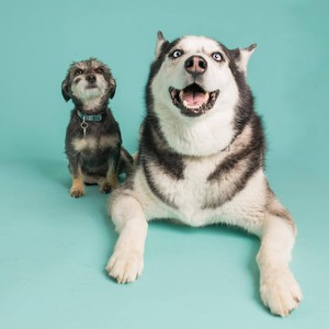 Photo uploaded by The Modern Pet